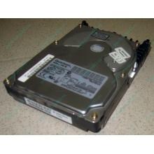 Жесткий диск 18.4Gb Quantum Atlas 10K III U160 SCSI (Черное)